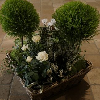 Coupe plantes haute